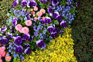 Grabgestaltung mit Stiefmütterchen im Frühjahr