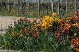 Blumen im Weinberg
