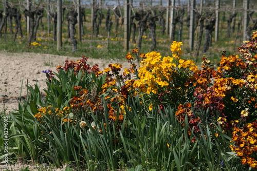Foto op Canvas Wijngaard Blumen im Weinberg