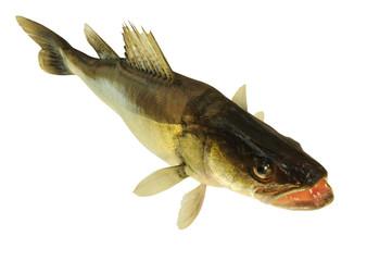 Fische 56