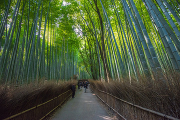 Bamboo grove in Arashiyama, Kyoto, Japan © javarman
