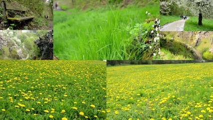 montage - spring nature - path , fields with dandelion etc.