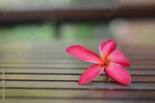 In de dag Frangipani plumeria flowers
