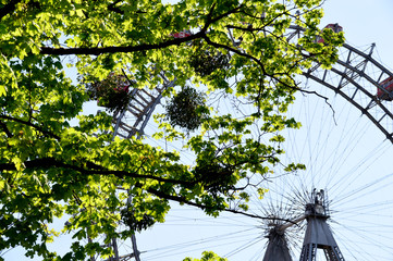 Leuchtende Blätter vor dem Wiener Riesenrad