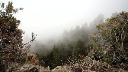 fog landscape - forest in clouds