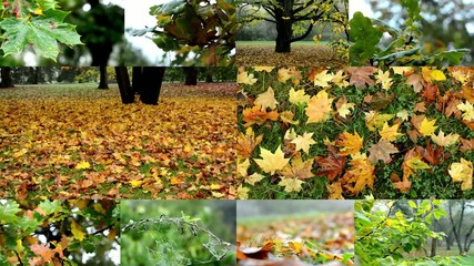 montage - autumn park - fallen leaves from trees-park - forest