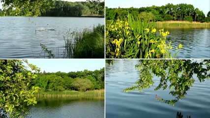 montage - Lake and green trees with yellow flowers - swans