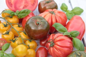 verschiedene tomaten sorten