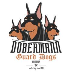 dobermann hund wachhund