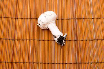 fungo bianco su sfondo marrone