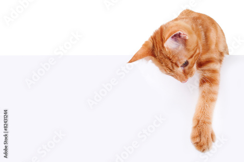Cat Banner Sign - 82431244
