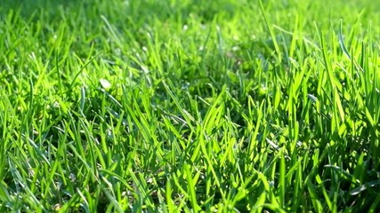 Grass backlit by sun macro