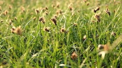 Grass in the wind macro