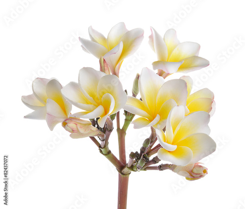 Deurstickers Frangipani frangipani flower isolated