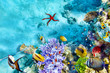 Underwater world with corals and tropical fish. - 82449090