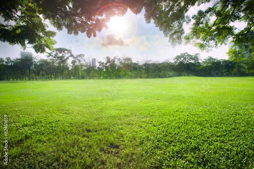 sun light over sky in beautiful green grass field of public park - 82451659