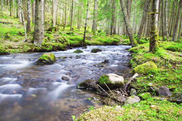 Spring Forest Lanscape with River Flowing