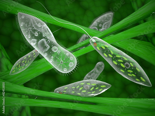 Protozoa - 82453850