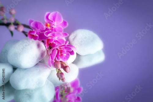 orchidea soft