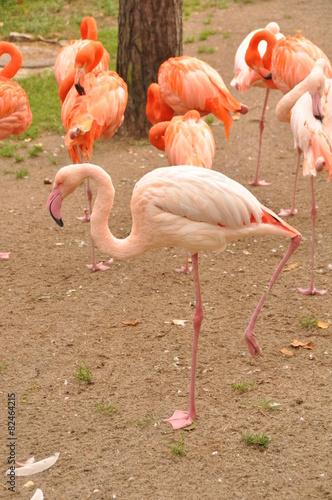 Foto op Aluminium Flamingo pink flamingo zoo