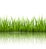 Fototapeta Kitchen - Green grass lawn with reflection on white. Floral nature spring © Makkuro_GL