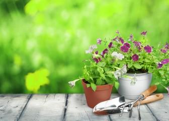 Gardening Equipment. Forget-me-not