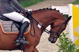 Das Pferd reiten