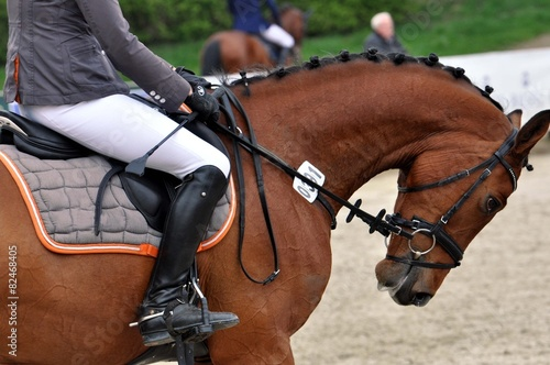 Das Pferd reiten - 82468405