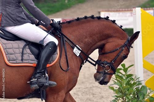 Das Pferd reiten - 82468426