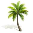 Palm Tree - 82470059