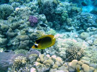 коралловый пейзаж