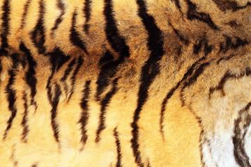 textured real tiger pelt