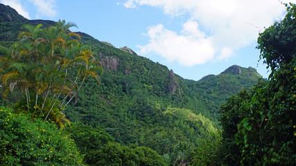 green seychelles