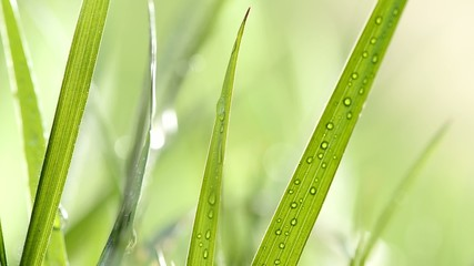 detail of grass with drops of water,shallow depth of field