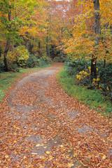 落ち葉の森の道、Road of fallen leaves of the forest