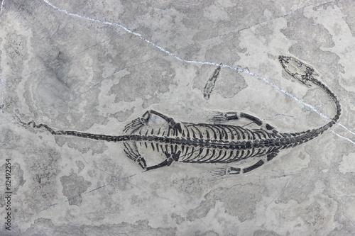 Leinwanddruck Bild original Keichousaurus hui Fossil gefunden in Xingyi/ Guizhou (China)