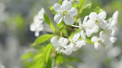 White inflorescence flower