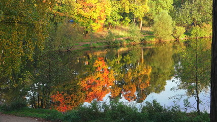 Autumn forest. Lake. Autumn Landscape. 4K.