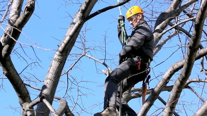 Tree Climber Among Branches