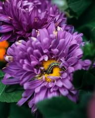 beautiful flower caterpillar eats