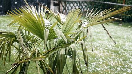 Schnee rieselt auf der Palme nieder