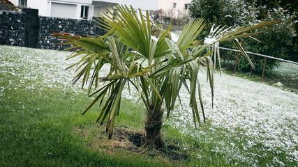 Wintereinbruch Palme