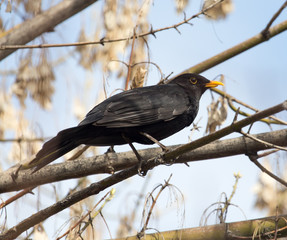 starling on tree