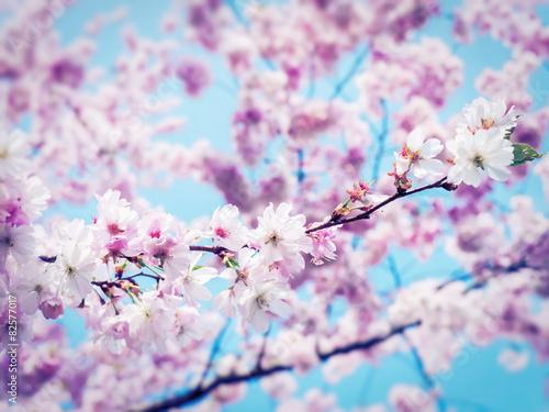 fototapeta na ścianę wiosna