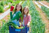 Litte kid farmer girls in vegetables harvest