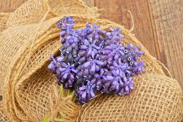 Small bouquet of hyacinth