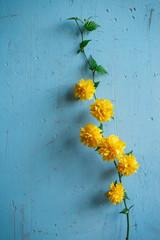 Yellow Japanese Kerria