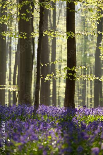 sloneczny-wiosenny-las-z-dzwonkami