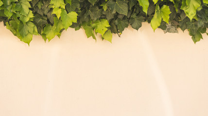 Hintergrundmotiv - Fassade mit Efeuranken