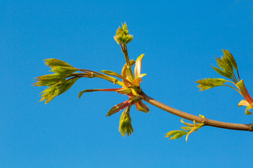 young sprout of wood against the sky